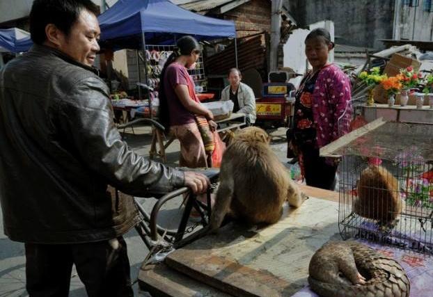 许智宏等19名院士学者联名呼吁:杜绝野生动物非
