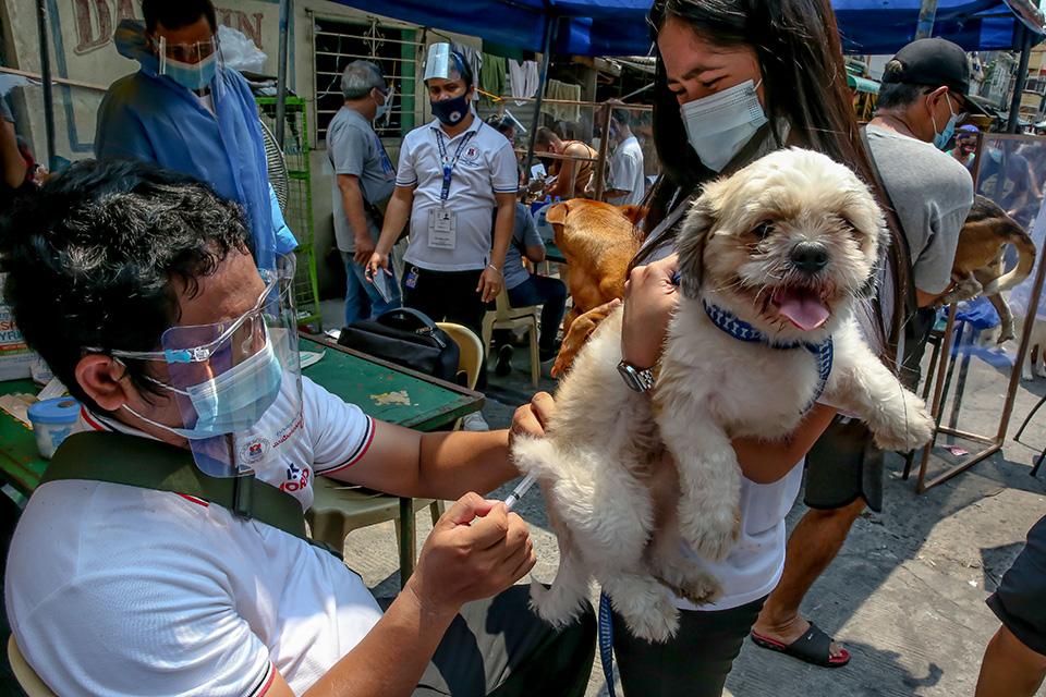 每年四千万人被猫狗咬伤:给狗打针,消灭狂犬病,还有多远?