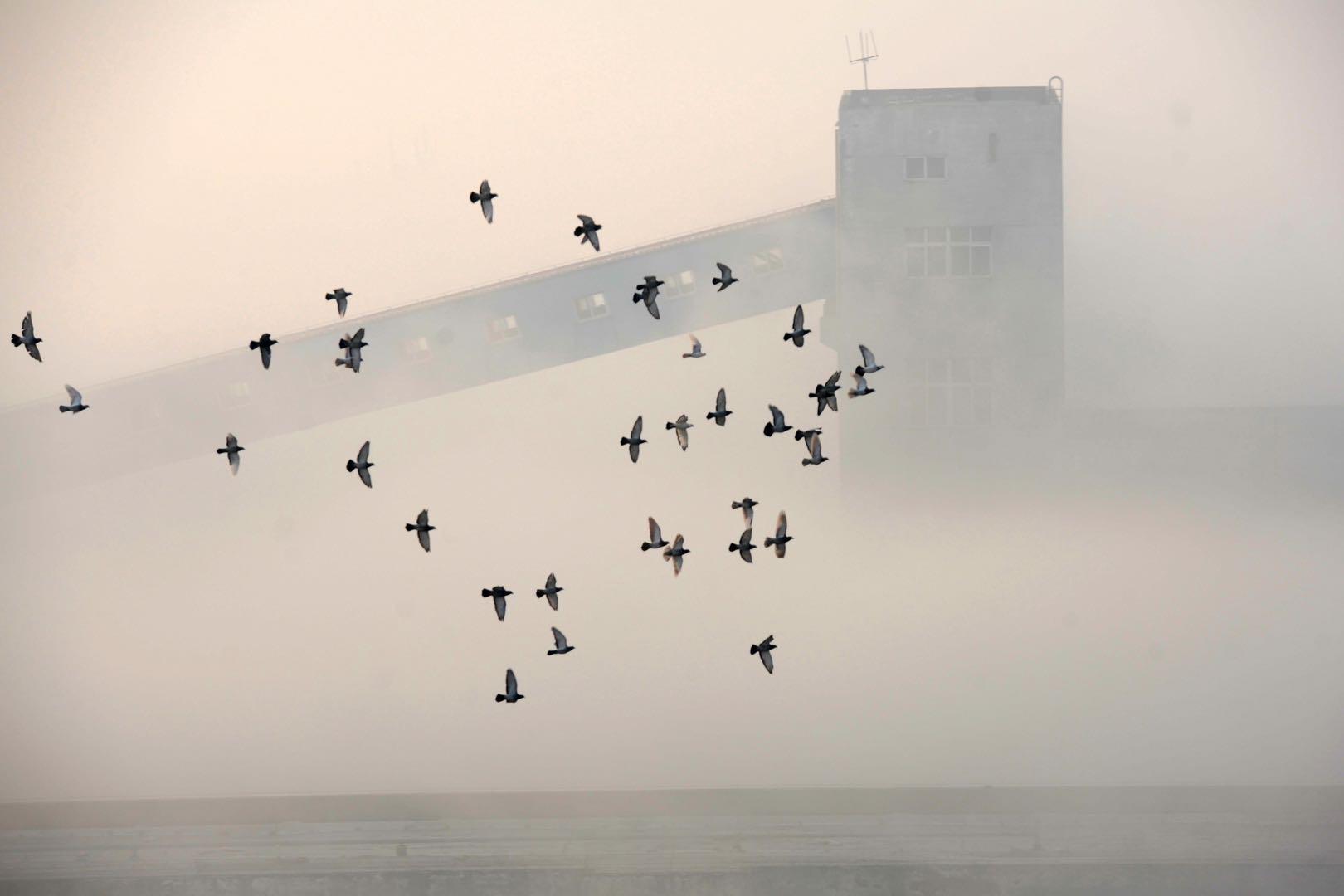 隱秘的賭鴿游戲:1250萬拍下一只鴿子