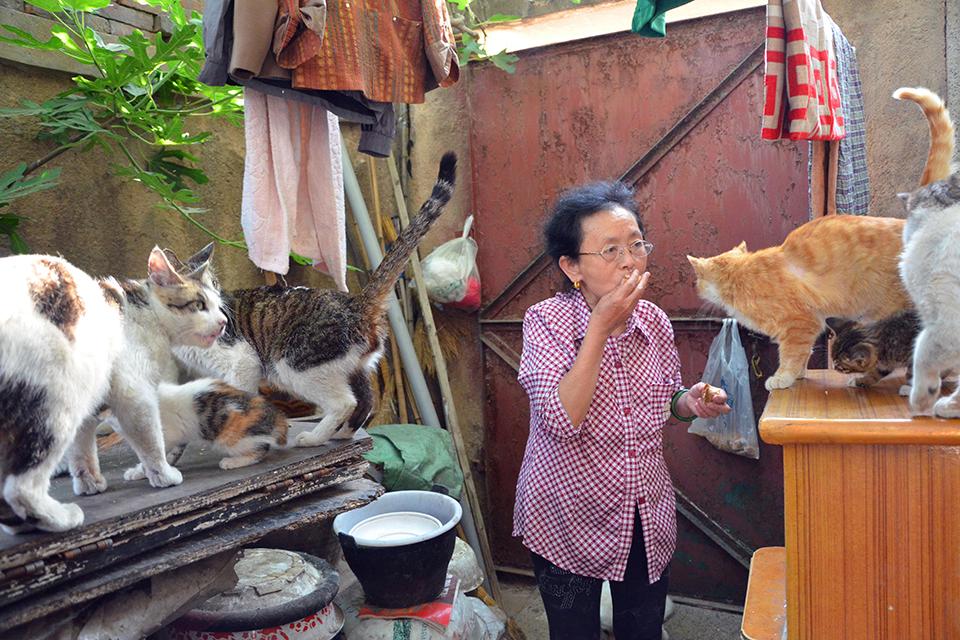 """流浪动物的""""生态""""争议:""""流浪猫问题从未如今天那么急迫"""""""
