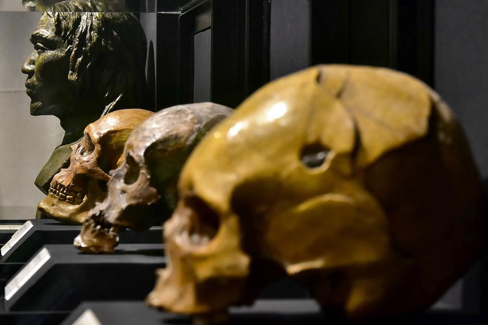 寫在基因里的人類史——李輝談人類遷徙和中華民族形成