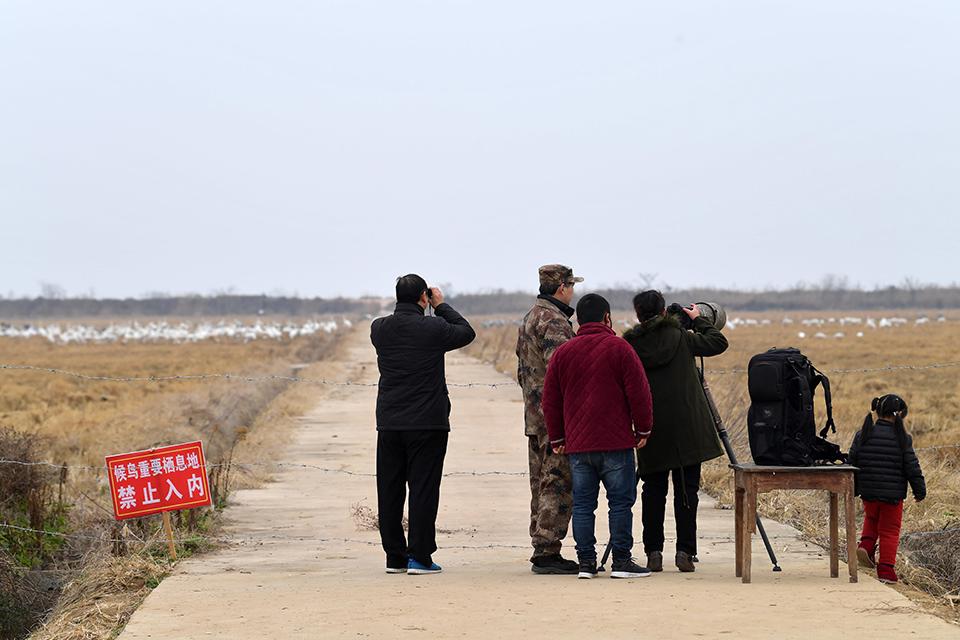 """年轻、社交、专业化——14万中国""""鸟人""""图鉴"""