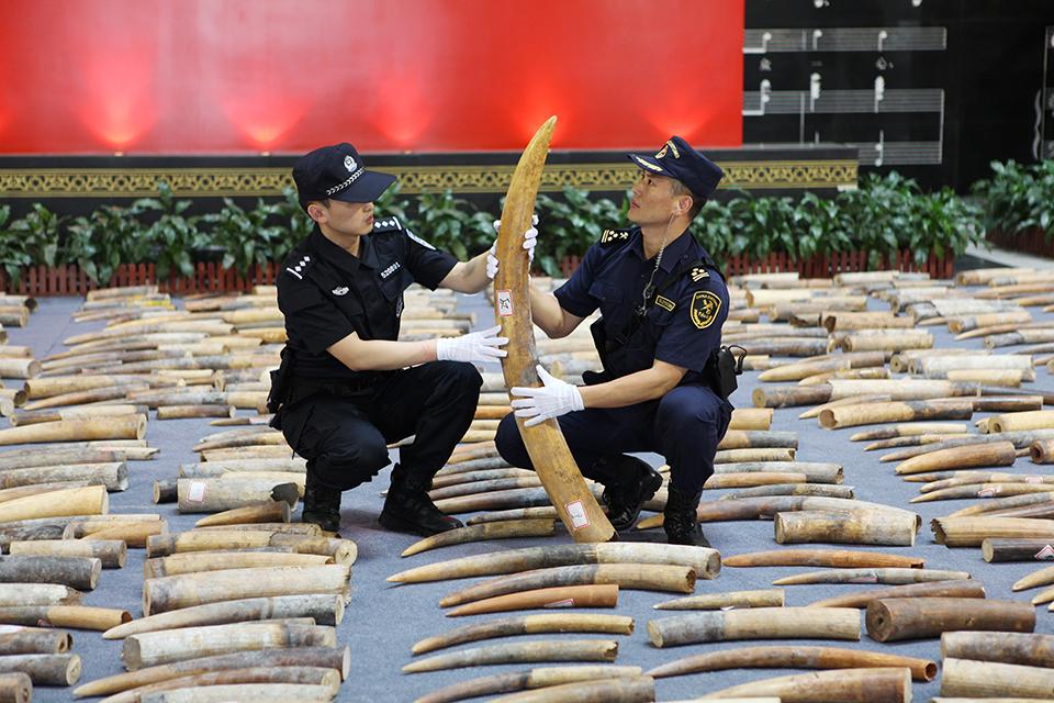 20吨象牙的利益之旅——新中国最大象牙走私案台前幕后