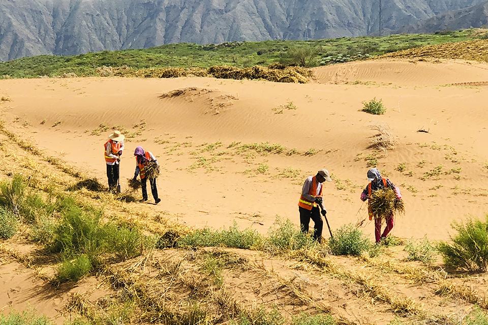 """寧夏沙坡頭:沙漠不等于""""沙魔"""" 從草方格固沙到實驗室測沙"""