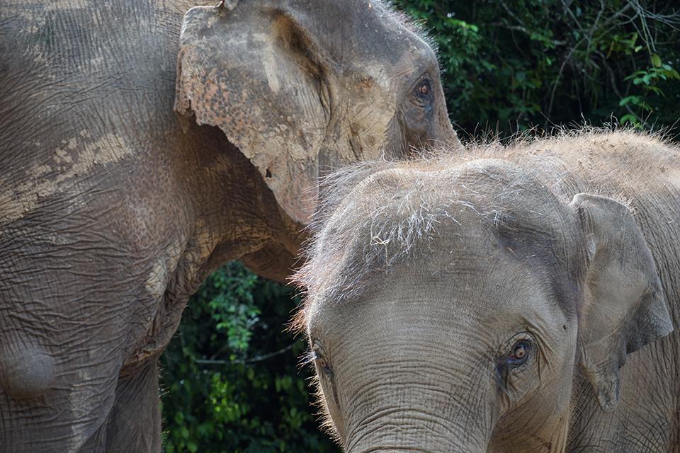 亞洲象國家公園醞釀六年:第一版把西雙版納州都劃進去了