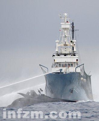 日本捕鲸船撞毁反捕鲸组织快艇1