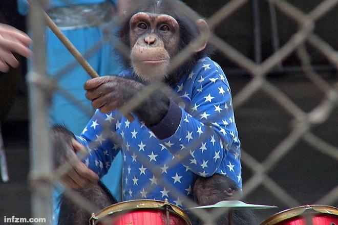 10 中国成黑猩猩非法贸易的最大目的地?