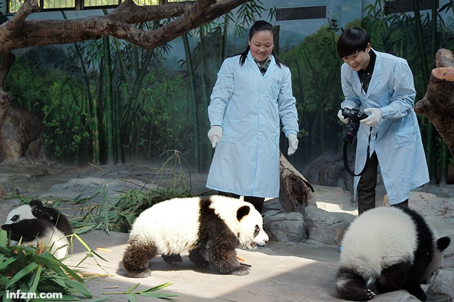 动物保护组织狙击湖南卫视真人秀
