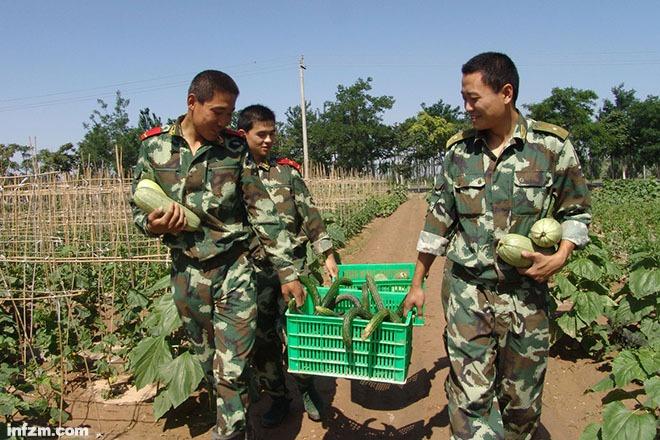 解放军还养猪种菜吗?