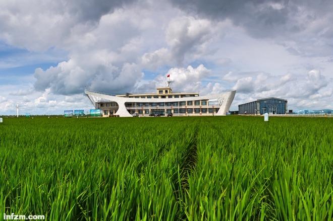 每日壹图:中国|黑土地上万亩水稻试验田