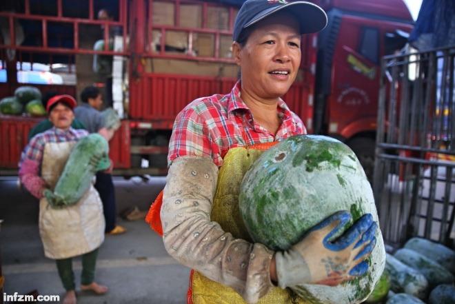 菜农把新鲜运到的冬瓜从货车上抱下来。