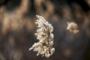 05 冬之光.jpg
