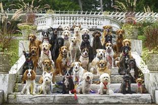 他遛过的狗狗超过5万只0
