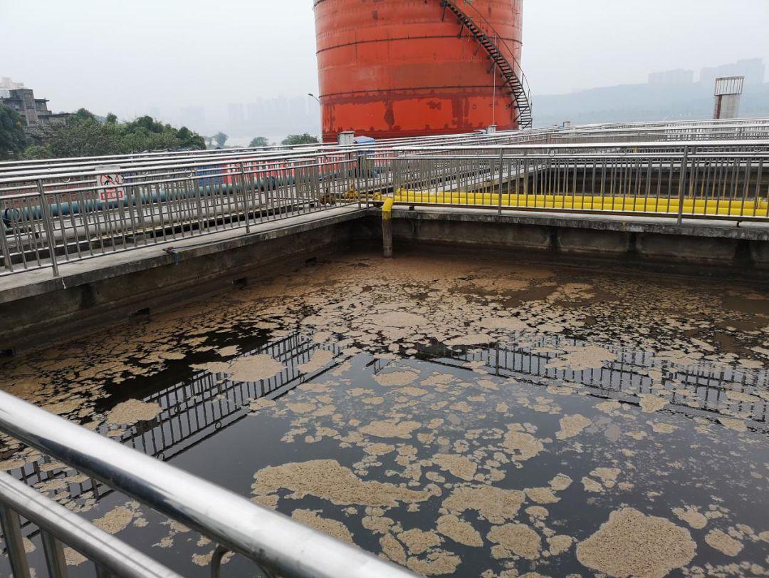 圖3 瀘州老窖污水處理站生化池漂滿死泥
