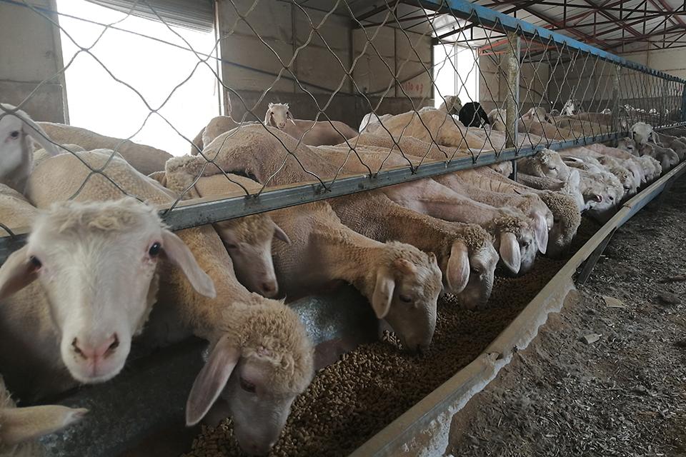 09 众牧宝理财真相调查:养着羊,还把钱赚了?1.jpg