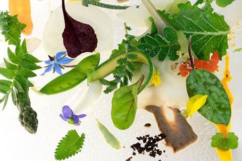 餐盤里的花花食界1