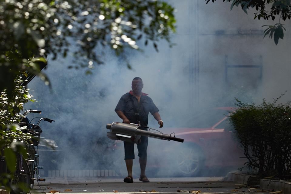 """""""团灭""""蚊子,对抗登革热,这项灭蚊技术登上了《自然》"""