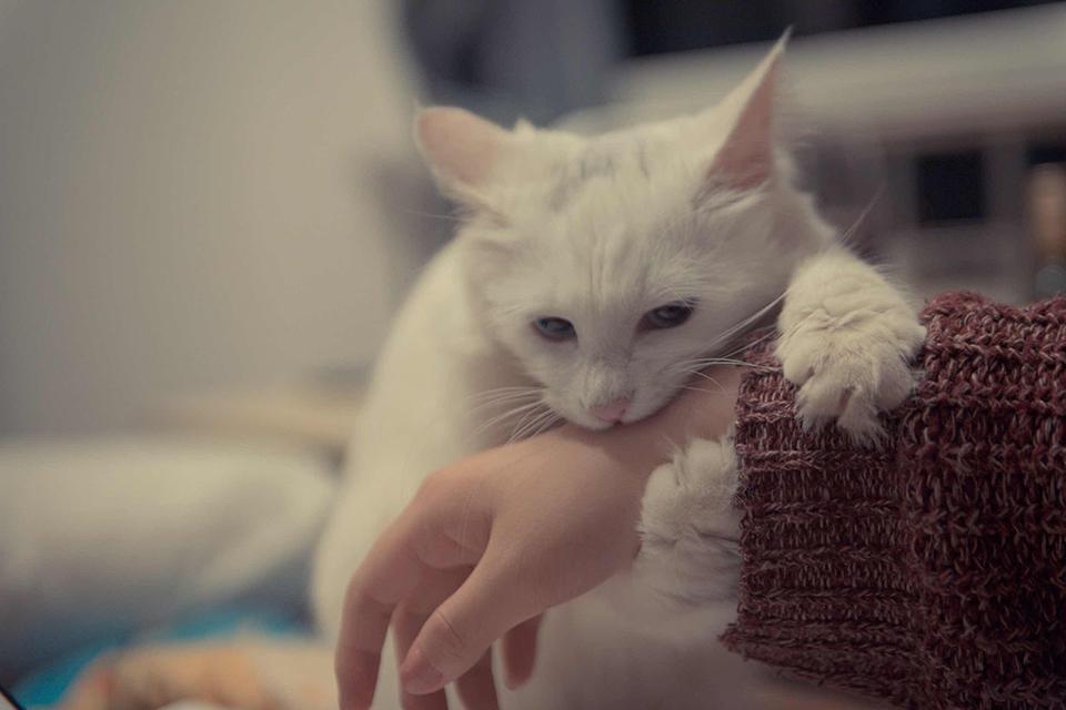"""为什么""""撸猫撸狗""""可以显著减缓人的压力?"""