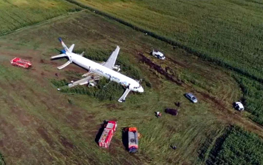 神仙操作!飞机撞鸟后硬着陆玉米地 233人全员生还