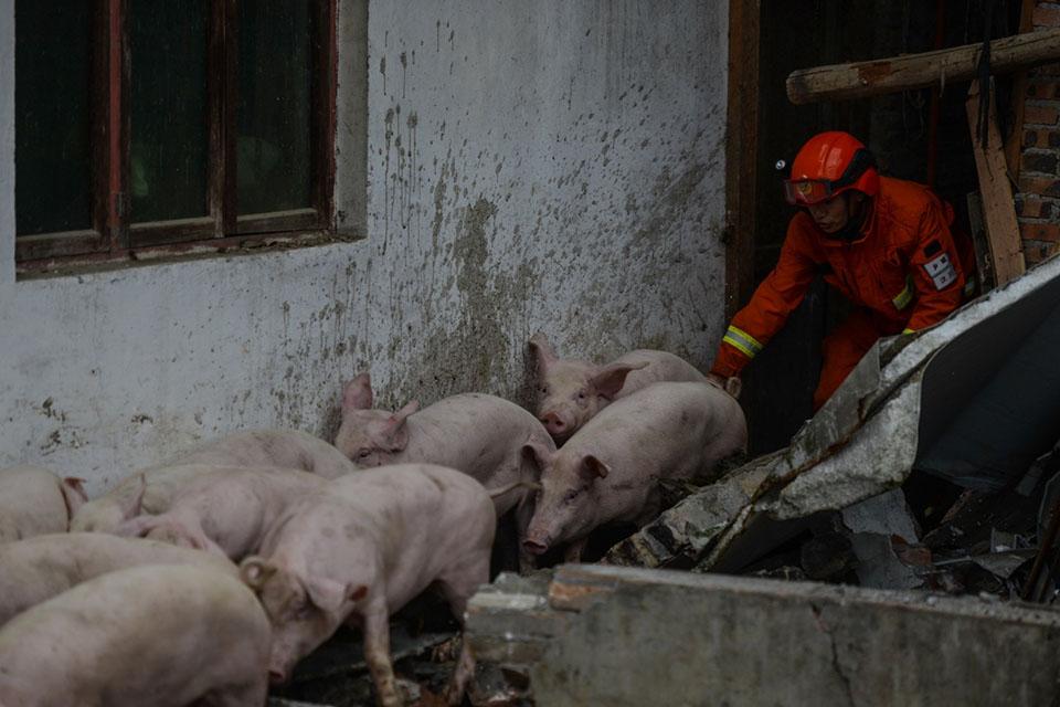 记者手记如何真正支持农户养猪?