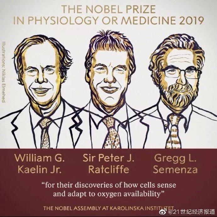 """2019首个诺贝尔奖:解密细胞如何""""感知""""氧气,肾癌治疗或成最先受益领域"""