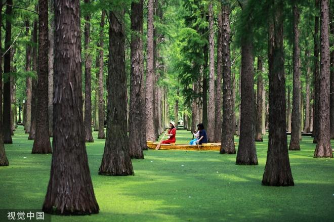 《森林》森林就不同了,森林使人变小、变得谦恭。