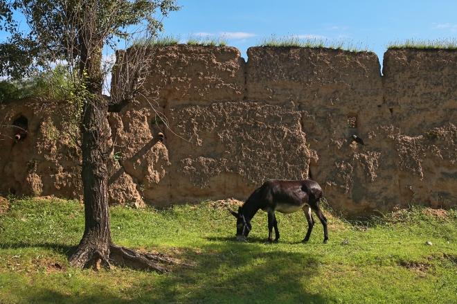 《失物小述 | 以驴会友》(图文无关)1970年代,驴在马州人眼中是奢侈物,负责交易一头驴的人绝非一般人。