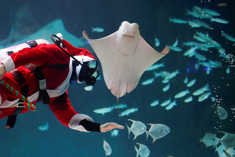 眼睛在旅行丨水族馆里的圣诞老人