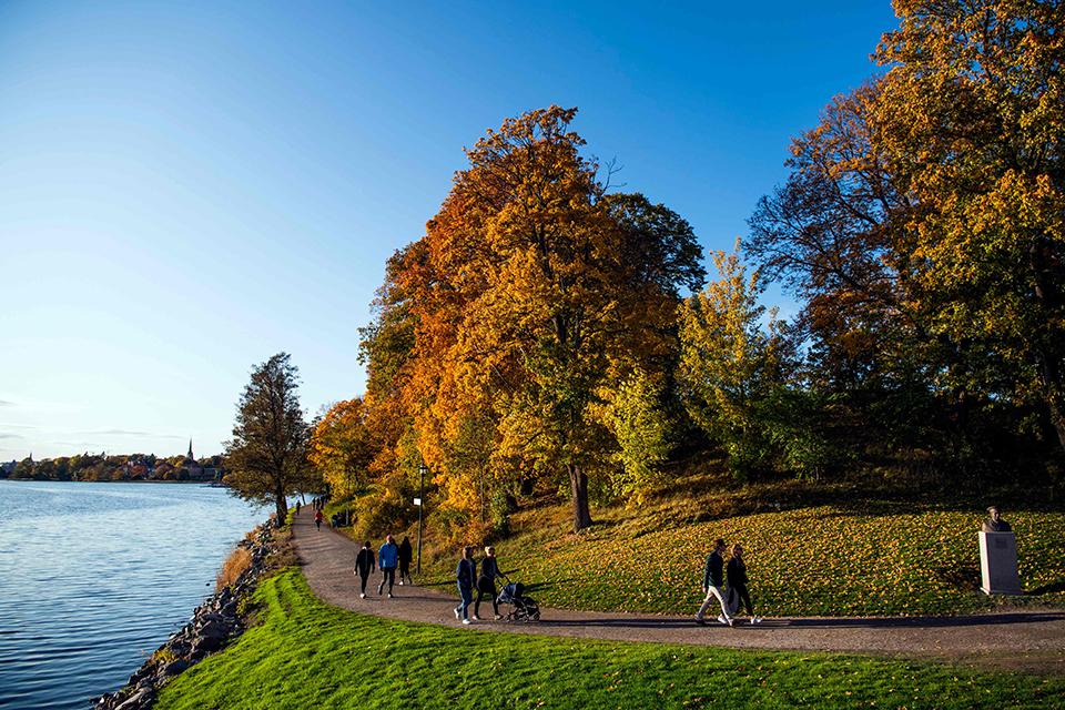 城市綠地如何影響大腦狀態?