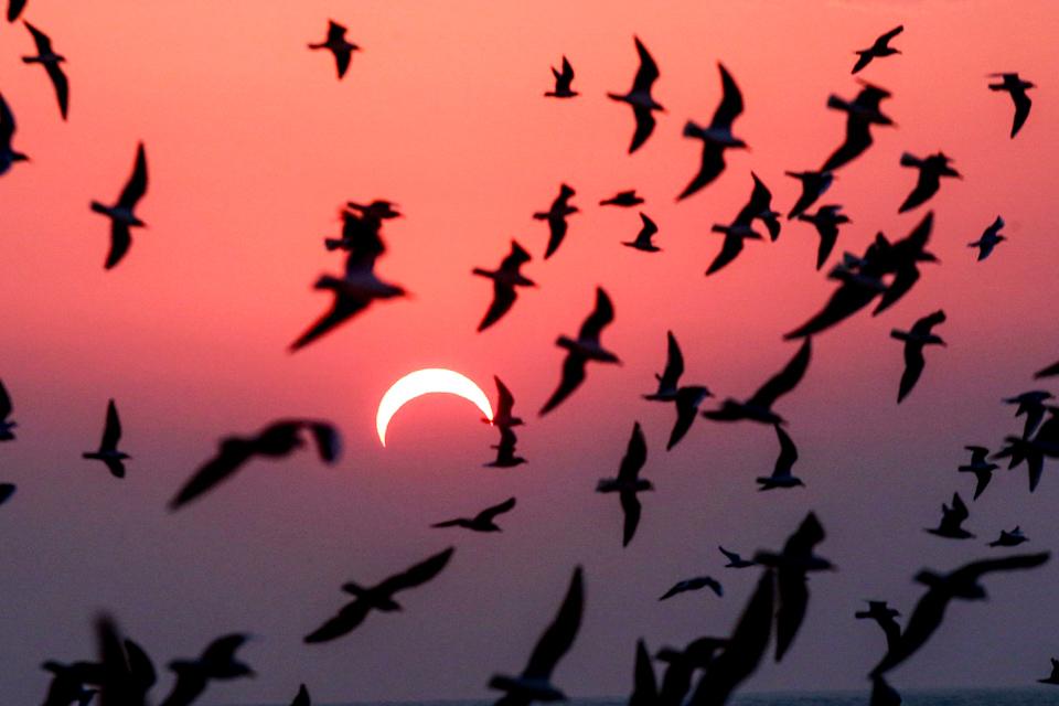 金環日食掠影