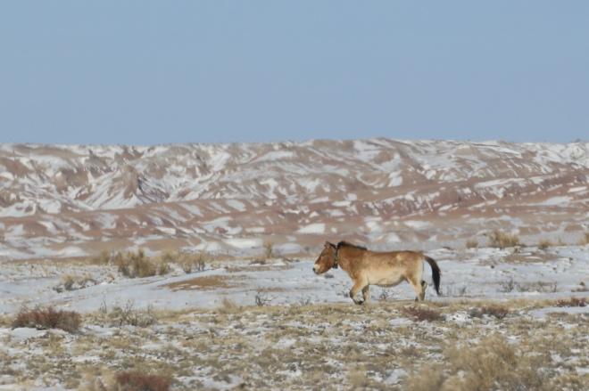 《大家小说   宿星滩》(图文无关)苏兴滩农场,准噶尔盆地西南盆沿儿边边上了,再西,古尔班通古特沙漠。