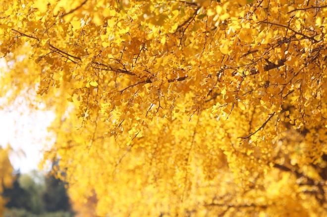 《大家小说 | 冤不冤》(图文无关)秋日暖阳透过窗外一棵大树照进严文井的书房,他总共问了十几个人。