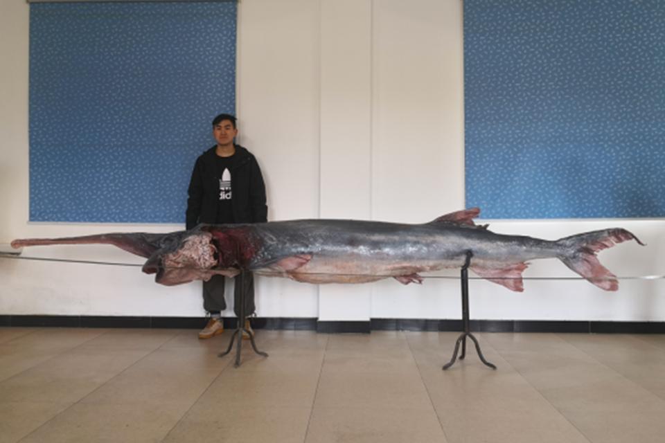 未寻到白鲟的那次长江调查,还有140种鱼类也未发现,白鲟悲剧不是最后一个