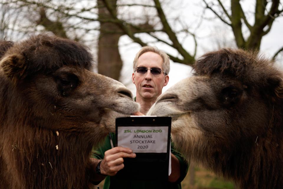伦敦动物园动物大盘点
