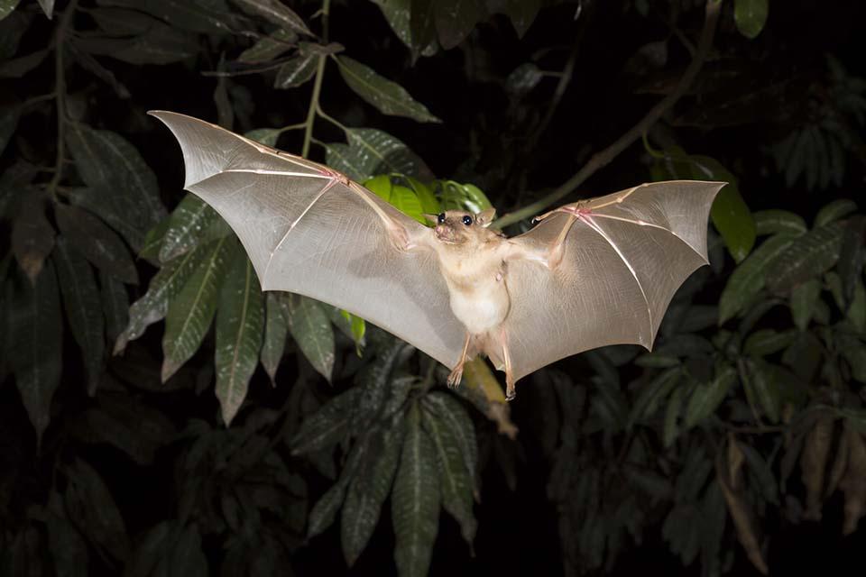 蝙蝠与病毒