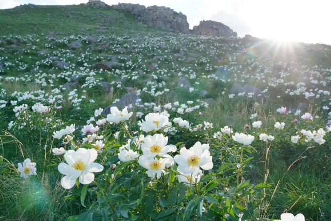《愛情意識流 | 異域的土壤故鄉的花》(圖文無關)等到親自做園丁花農,才想起有歷書的春天,有生活的春天。