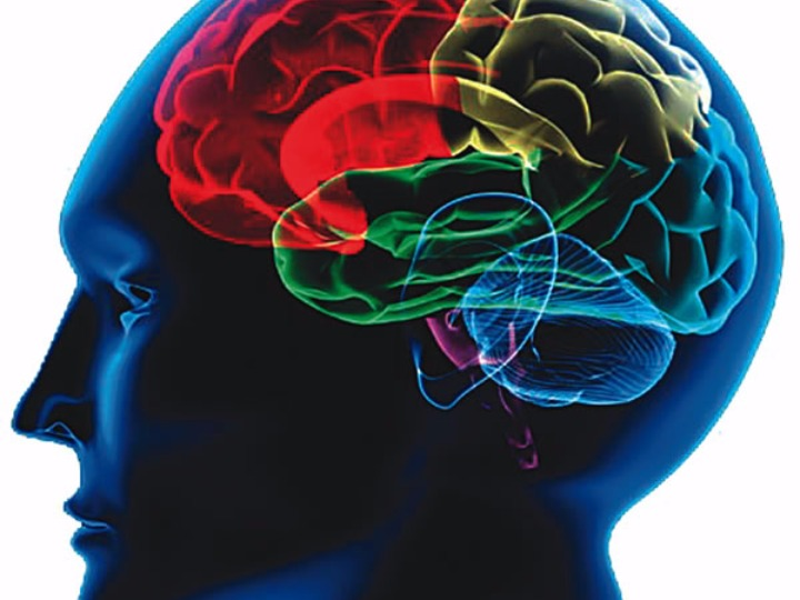 神經興奮性與壽命相關,真的嗎?