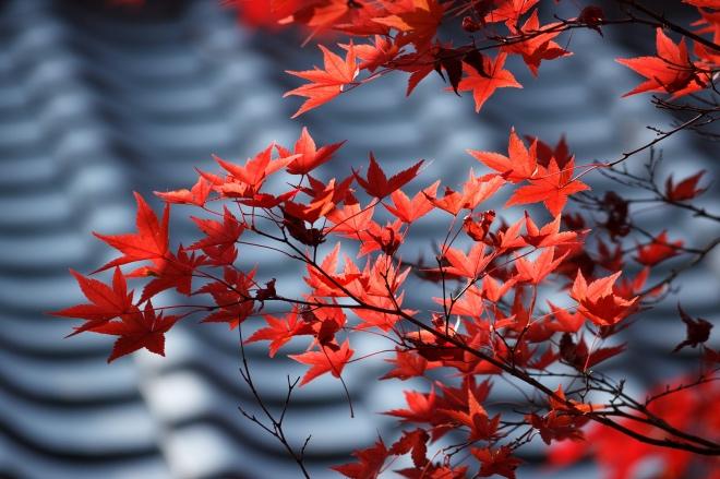 《大家小说 | 鸟啼红树里》(图文无关)扑面的风有些凉意,塞外的树木开始变红了。