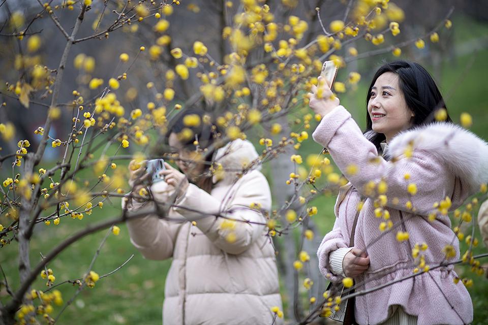 梅花是武漢市花,不止是用來賞的