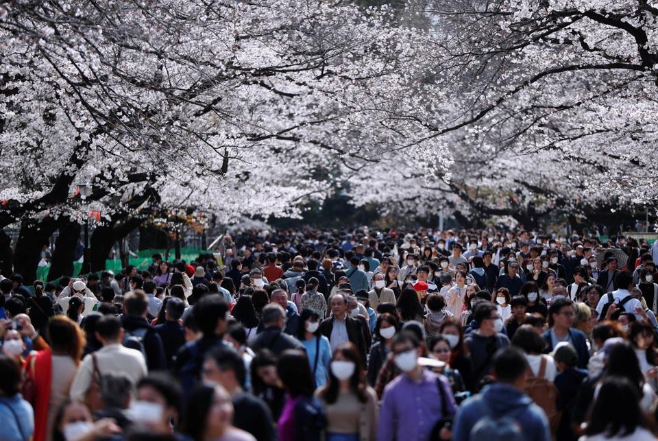 日本人山人海只为赏樱