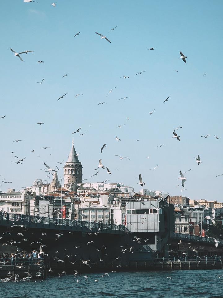 """土耳其,""""無疫情孤島""""的淪陷"""