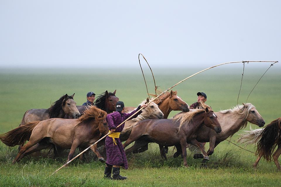 游牧智慧:从三匹战马到三万头羊——蒙古国缘何恢复回鹘体蒙文