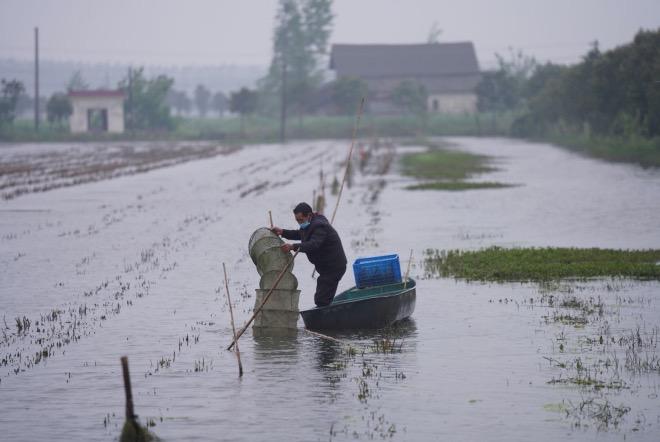 虾农马于林在虾田里划船准备收虾子。