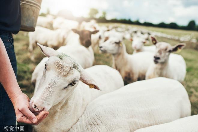 《大家小说丨杀羊》(图文无关)他前面有一只羊,奇怪地歪着头不停转圈。