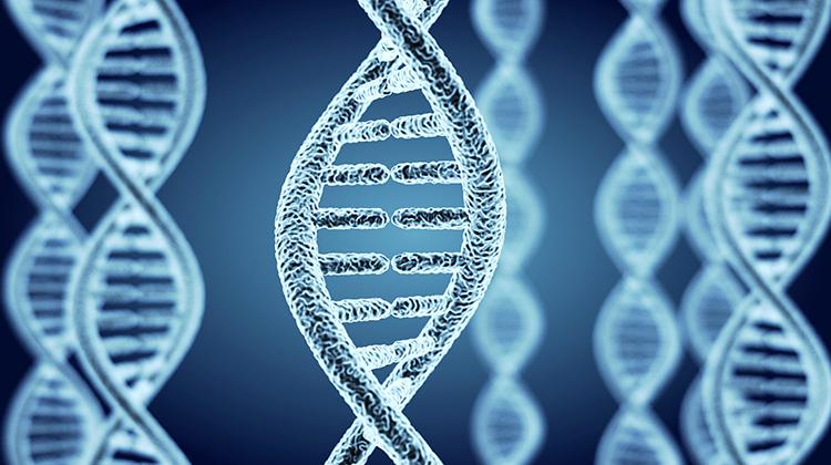 最矮的基因突變找到了