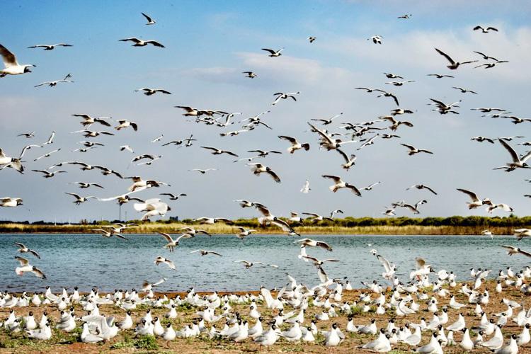 沙漠中的育鸟绿洲