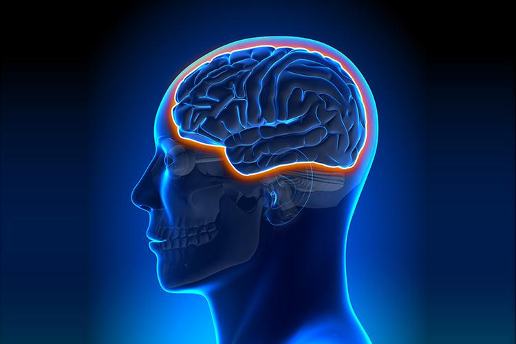 当人变老后,血脑屏障也会年久失修吗?
