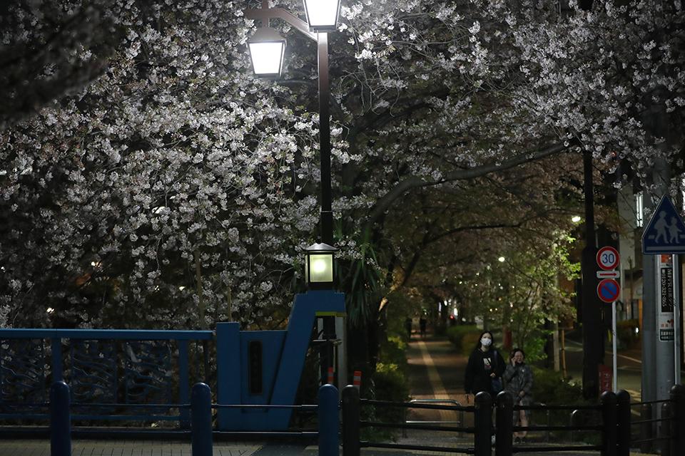 暗戀桃花源的日本人,又開啟了一次集體出逃
