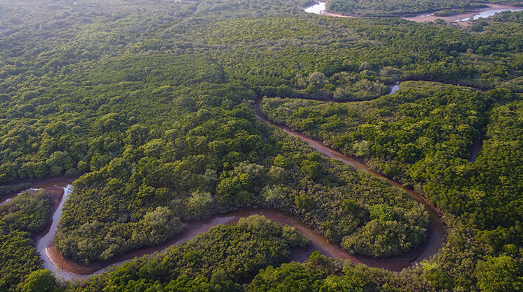 """""""海岸卫士""""红树林保护修复专项行动计划印发,红树林地用途将严格管制"""