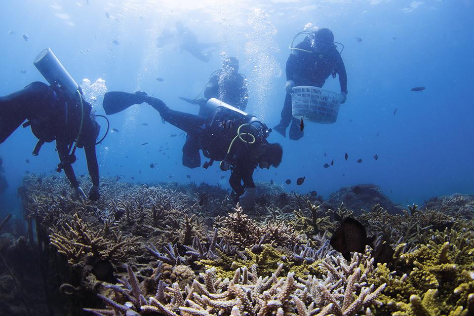 """13 """"岛礁上房子越来越多,珊瑚礁状况越来越差"""".jpg"""